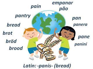 World bread cognates panis